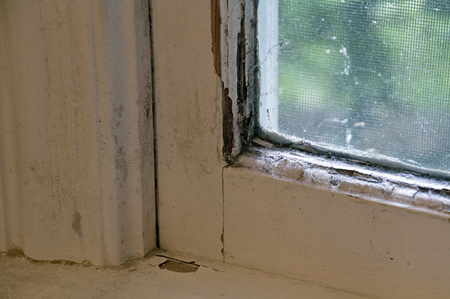 mold can grow on leaky windows